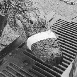 Alligatorbait