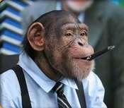 Llphs_monkey_3