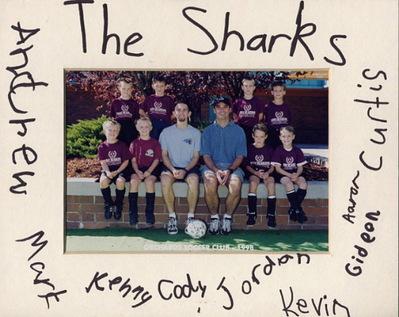 Sharks_2